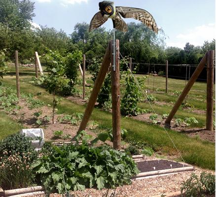 ใช้หุ่นนกฮูกไล่นกกระจอกและนกชนิดอื่นๆเข้ามาบุกรุก สร้างความรำคาญในแปลงผักและสวน
