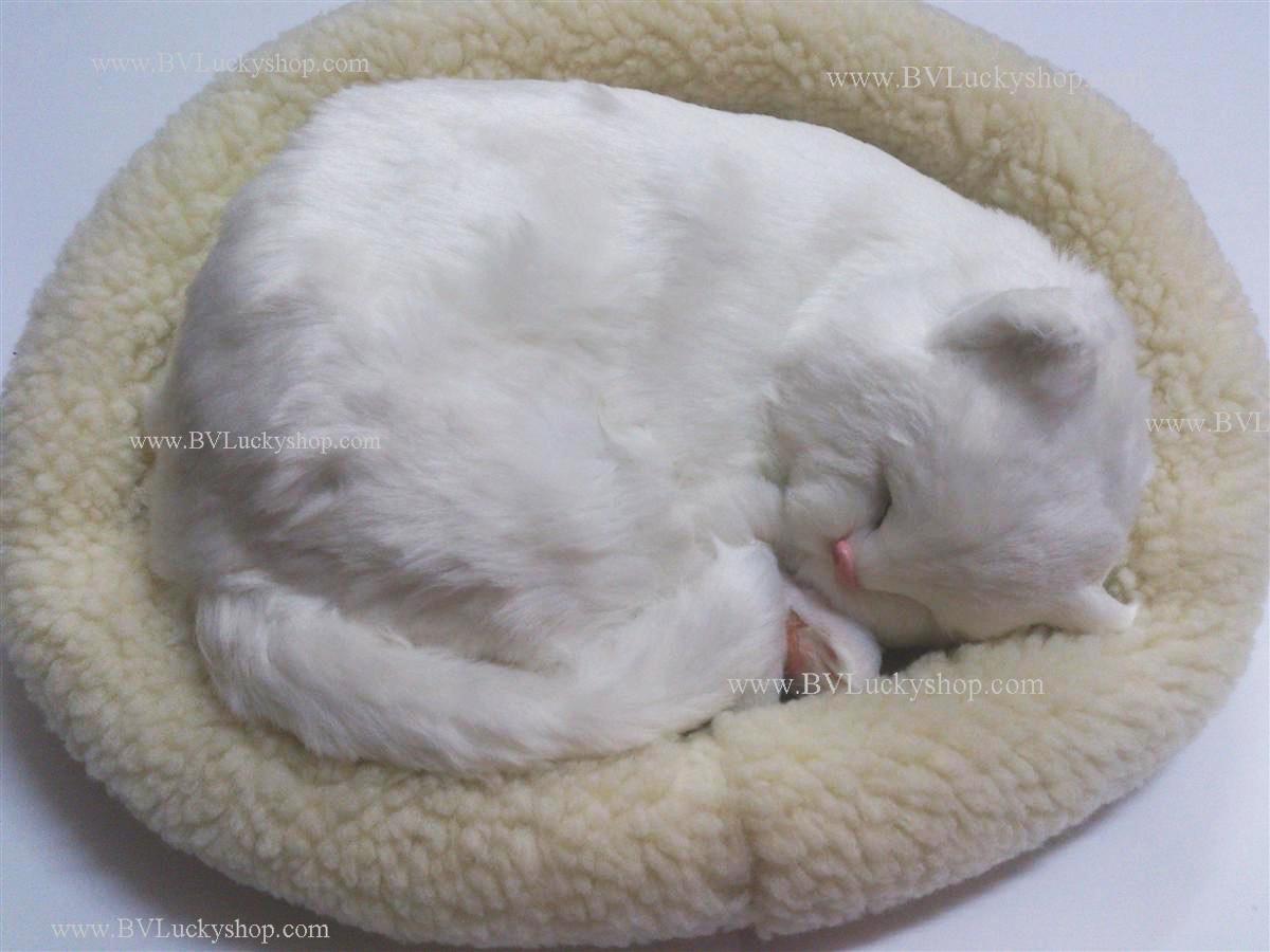 ตุ๊กตาแมว นอนหลับ หายใจได้ (ใส่ถ่าน) สีขาว เหมาะกับ ใช้ในงานแต่งงาน