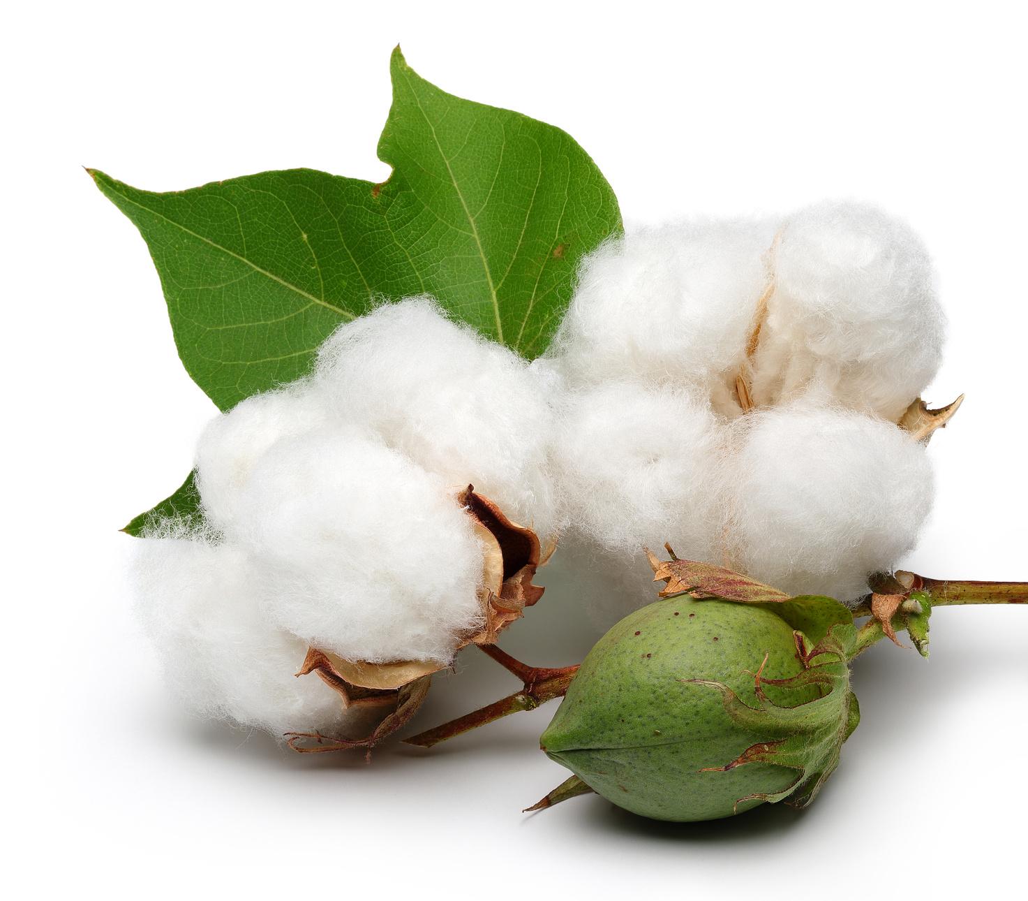 ประเภทของผ้า cotton ที่นำมาใช้ในการสกรีนเสื้อ