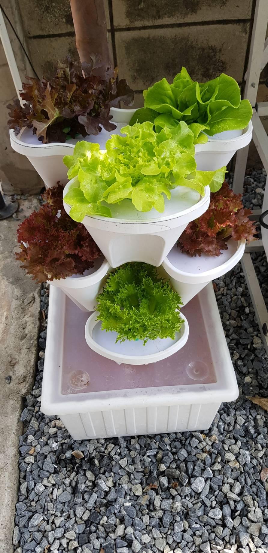 ชุดดอกไม้ FS ดีไซน์สวย ประหยัดพื้นที่ สะอาด ไม่ต้องรดน้ำ