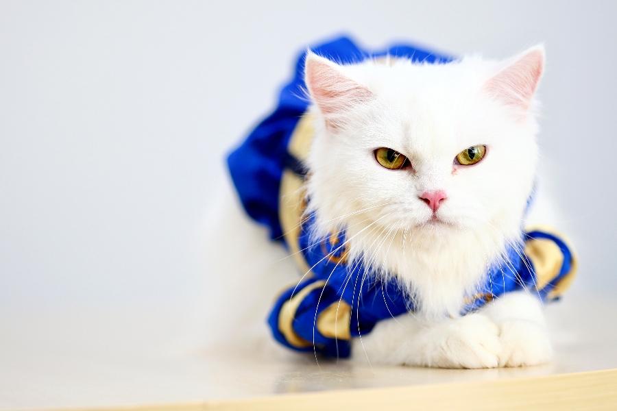 ฝากแมว,รับฝากแมว,รับเลี้ยงแมว,โรงแรมแมว