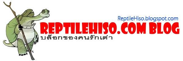 reptilehiso.blogspot.com